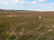 Stone Circle on Withypool Hill - geograph.org.uk - 53966.jpg