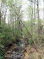 Stream near Duke - panoramio.jpg