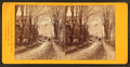 Street view, Montpelier, Vt, by C. H. Freeman 2.png