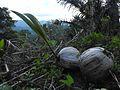 Sulawesi trsr DSCN0801.JPG
