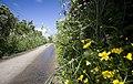 Summer Hedgerows near Chyenhal - geograph.org.uk - 1497360.jpg