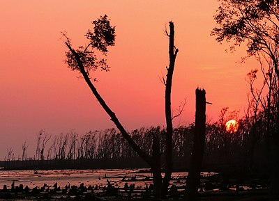 Sundarbans a few months after cyclone sidr.jpg