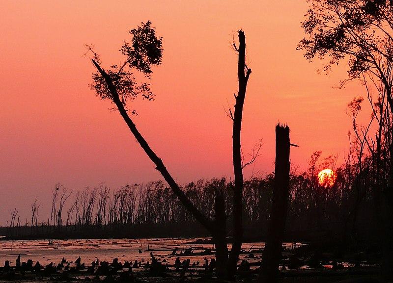 Sunderbans, West Bengal: Surreal wildlife sanctuary