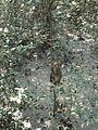 Sundarbon MONGLA 02.jpg