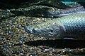 Sunshine international aquarium, Tokyo, Japan (281209594).jpg