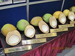 Kelapa - Wikipedia Bahasa Melayu, ensiklopedia bebas