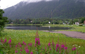 Swan Lake in Sitka 4599.png