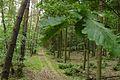 Szlak zielony Gleboczek Lopuchowo, Puszcza Zielonka (5).JPG