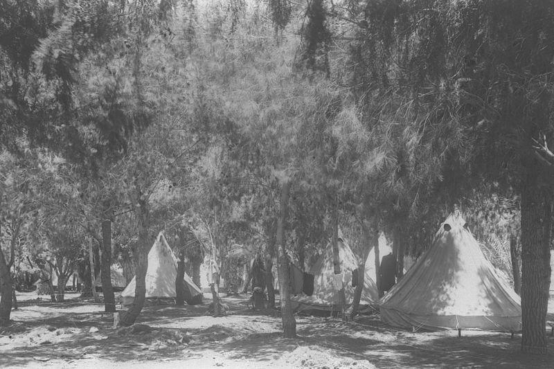 Лес Герцля, посаженный первыми переселенцами вкибуце Хульда