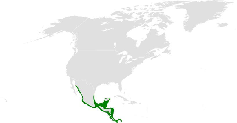 Tachycineta albilinea distribution map