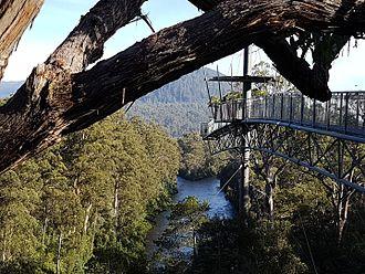 Canopy walkway - Tahune Airwalk, Tasmania