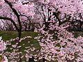 Takato Joushi Park4.jpg