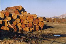 Tasmania logging 18 Near Hobart, the product.jpg