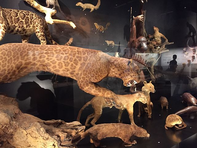 Natural History Museum Exhibits
