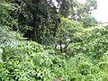 Tayabas,Quezonjf9995 19.JPG