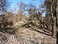 Tegel1 (110)Mäckeritzgraben am Uferweg nN.JPG