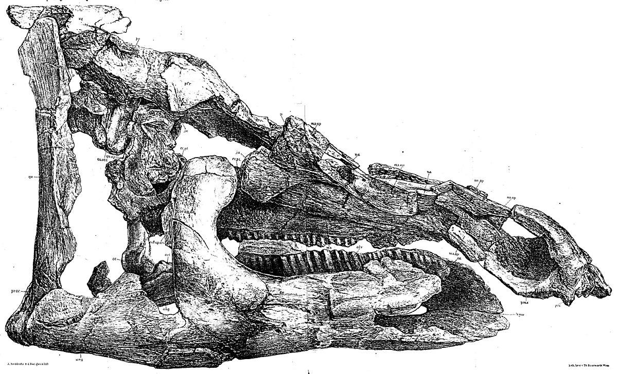 Telmatosaurus.jpg