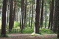 Tentsmuir Forest - geograph.org.uk - 1429898.jpg