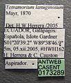 Tetramorium lanuginosum casent0173289 label 1.jpg