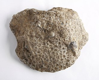 Petoskey, Michigan - The Petoskey stone found in the area; it is  named after the town.