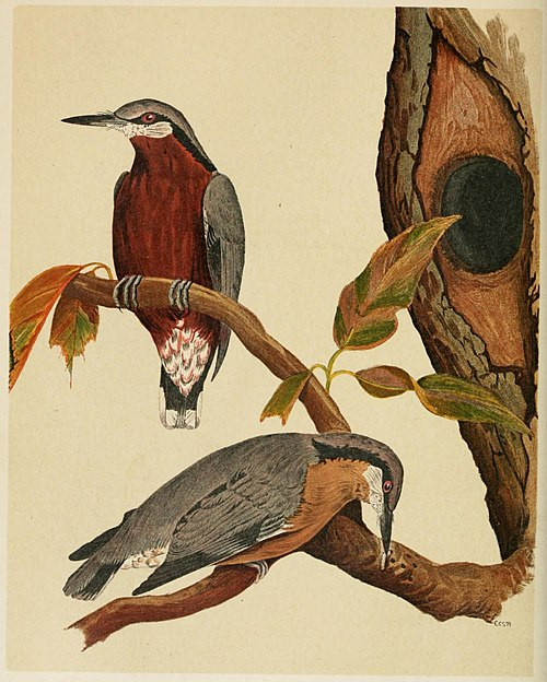 The Fauna of British India, including Ceylon and Burma (Birds Vol 1) 160.jpg
