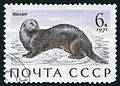 The Soviet Union 1971 CPA 4038 stamp (Sea Otter) cancelled large resolution.jpg