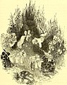 The comedies, histories, tragedies, and poems of William Shakspere (1851) (14596975267).jpg