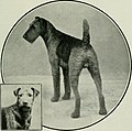 The complete book of the dog (1922) (20484713789).jpg