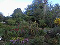 The flower beds near the house. September 2013. - Клумбы у дома. Сентябрь 2013. - panoramio.jpg