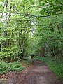 The green tunnel of the lane towards Rievaulx - geograph.org.uk - 432289.jpg