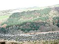 The incised valley of Afon Hen and the Cwm-gwared Plantation - geograph.org.uk - 344183.jpg