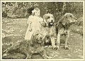 The new book of the dog - a comprehensive natural history of British dogs and their foreign relatives, with chapters on law, breeding, kennel management, and veterinary treatment (1911) (14577258017).jpg