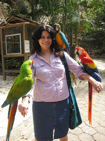 Three species of Ara macaws with a visitor at ...