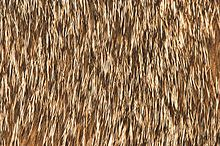 "Close-up view of the fur of an Abyssinian cat, showing the ""ticked"" effect"