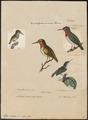 Todus viridis - 1700-1880 - Print - Iconographia Zoologica - Special Collections University of Amsterdam - UBA01 IZ16700305.tif