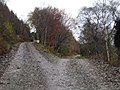 Track junction, St Mary's Loch - geograph.org.uk - 282500.jpg