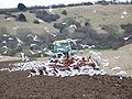 Tractor under attack, Faulston Farm - geograph.org.uk - 702687.jpg
