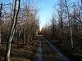 Trail (3496336978).jpg