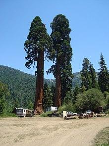 Alder Creek Grove Wikipedia
