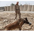 Training with military working dogs (4503120252).jpg
