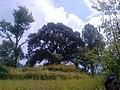 Tree at a village.jpg