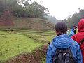 Trekking in Chiang Rai Province 2007-05 17.JPG