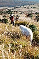 Trekking with dog in Kuju area, Oita pref.jpg