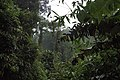 Tropical evergreen jungle, Khao Lak, Thailand.jpg