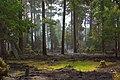 Tucker Fire (4010032968).jpg