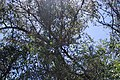 Tumacacori NHS DSC 0838 (15484062947).jpg