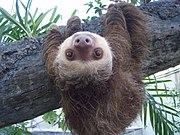 Yeah, a sloth. I mean, look at it. It's so happy, and all sloths worry about . two toed sloth