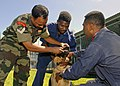 US Navy 070814-N-4954I-020 Indian army, Cpl. Dinesh K. Singh, a veterinarian technician, gives de-wormer medication to a German Shepherd with the local police canine unit.jpg