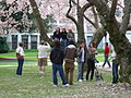 U Wash Quad cherry blossoms 07.jpg
