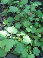 Unknown plant 1.jpg